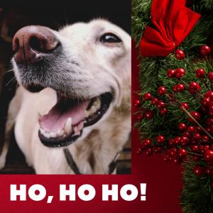 funny Christmas, dog, holiday humor